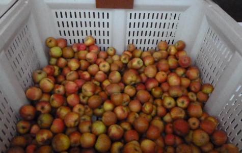 How do you like them apples? Preferably free of foodborne pathogens