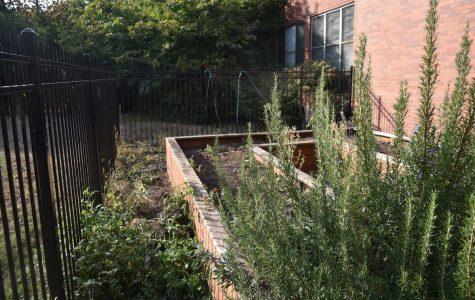 School garden offers opportunities for education, service