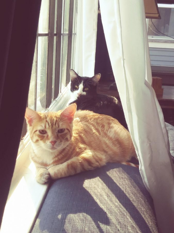 Biology teacher Maureen Kenny's cats, Gingerale and Dr. Pepper, have been a welcome addition to weekly classes.